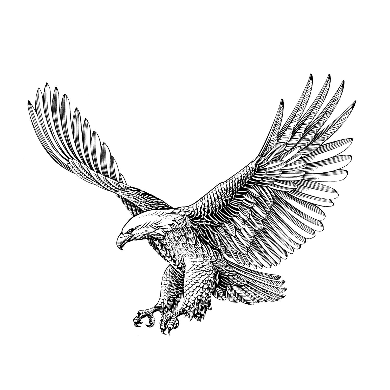 Aigle en vol amelie claire illustration traditionnelle - Dessin oiseau en vol ...