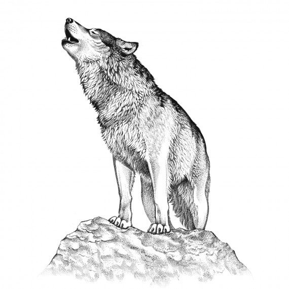 Portfolio amelie claire illustration traditionnelle - Dessin de loup simple ...