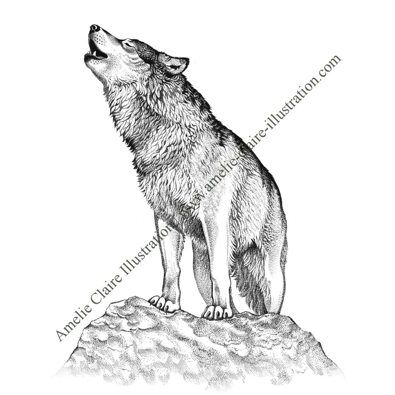 Loup amelie claire illustration traditionnelle - Image loup dessin ...